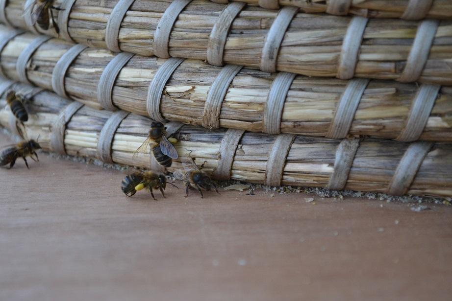 abeille-avec-pollen624.jpg