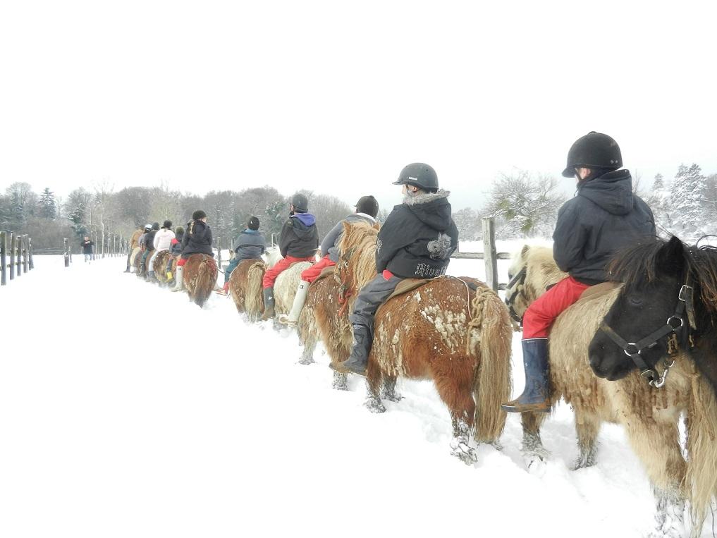poneys-sous-la-neige1.jpg
