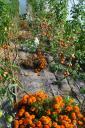 serre-automne.jpg
